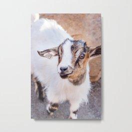 Living Treasures Animal Park - Goat Metal Print