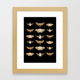 insects in gold - moths and beetles Framed Art Print