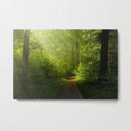 Woodland ,trees ,forest,nature landscape background  Metal Print