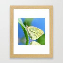 Butterfly 61 Framed Art Print