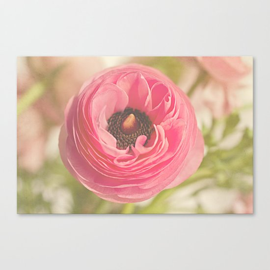 The Pretty Pink Ranunculus Canvas Print