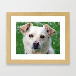 Blond dog portrait Framed Art Print