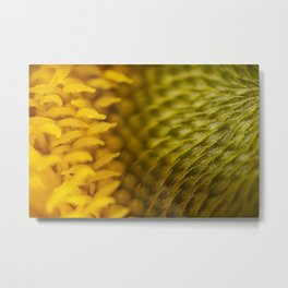 Extreme Macro Photo of a beautiful Sunflower. Metal Print