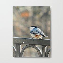 Curlicue bird Metal Print