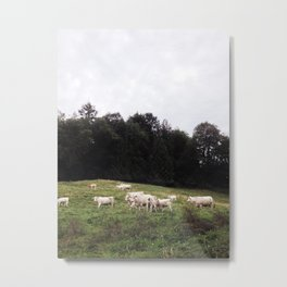 Bovine on a hill Metal Print