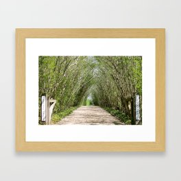 Natural Tree Branch Tunnel Framed Art Print