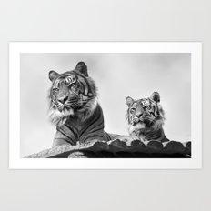 Tigers two Art Print