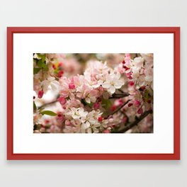 Apple Blossoms Pink Framed Art Print