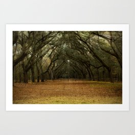 Enchanted Path Art Print