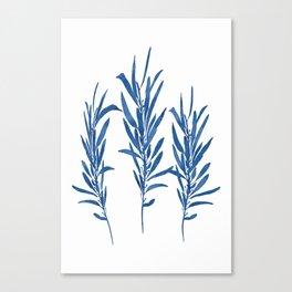 Eucalyptus Branches Blue Canvas Print