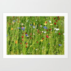 Colourful Garden - JUSTART © Art Print