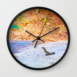 Goanna on a road in Australia Wall Clock