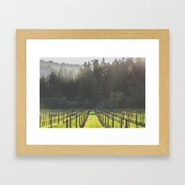 Anderson Valley Vineyard #4 Framed Art Print
