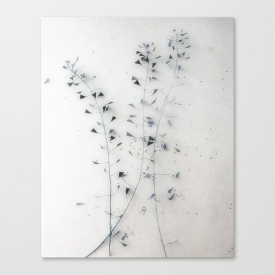 Straw I Canvas Print