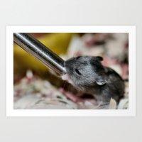 hamster Art Prints featuring Tiny Hamster by IowaShots