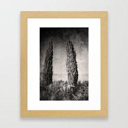 Umbrian Cypress Framed Art Print