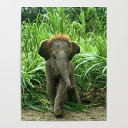 Elephant and Grass Poster