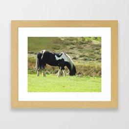 Horse Grazing in green welsh field Framed Art Print
