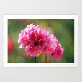 Pink Is The Color Art Print