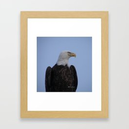 Bald Eagle on Watch along the Kenai River Framed Art Print