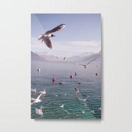 Seagulls And Bread Metal Print