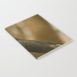 Red Crested Cardinal Notebook