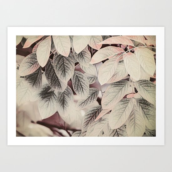 Touches of Pink Art Print