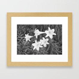 Crisp Lilies  Framed Art Print