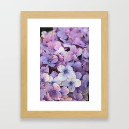 Blossom Purple Framed Art Print