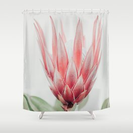 King Protea flower Shower Curtain