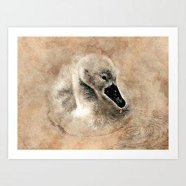 Cygnet Swan & Water Droplet Art Print