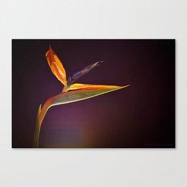 Strelizia - paradise bird flower Canvas Print