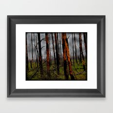 Burnt Forest  Framed Art Print