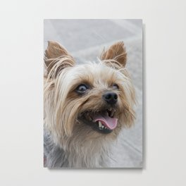 shitzu dog Metal Print