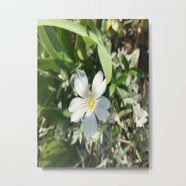 Delicate bloom Metal Print
