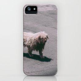 Beautiful Dog iPhone Case
