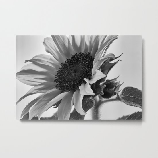Sunflower Black & White Metal Print