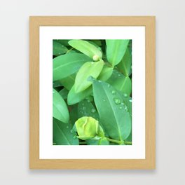 Kubota Garden green plant leaves with water drops Framed Art Print