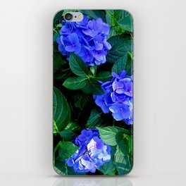 Three Hydrangea Blossoms iPhone Skin
