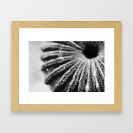 Unpopped Poppy Framed Art Print