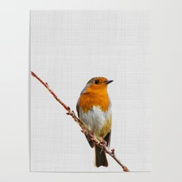Winter Robin Red Breast Poster
