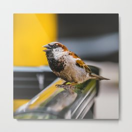 Angry Bird. Chirping Bird Photograph Metal Print