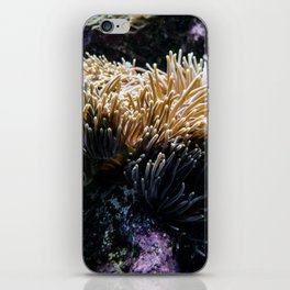 Understated Anemone iPhone Skin