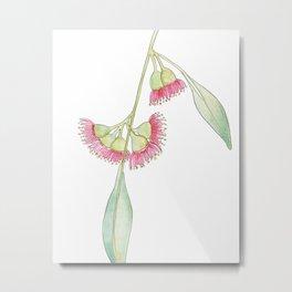 Gum Tree Flowers Metal Print
