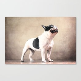 Frech bulldog Canvas Print