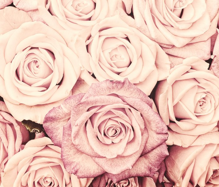 Some people grumble I Floral rose roses flowers pink Metal Travel Mug