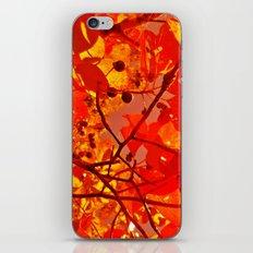 Fall Trees iPhone & iPod Skin