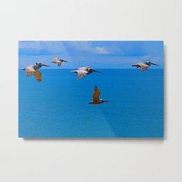 Pelican Flyby Metal Print