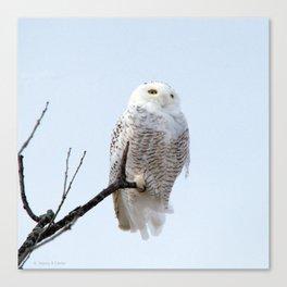 Lofty Vision (Snowy Owl) Canvas Print