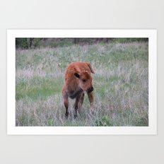 Baby buffalo calf Art Print